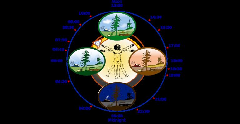 1200px-biological_clock_human-svg